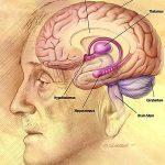 "Segala amalan bermula dengan Niat dan Otak ""Hippocampus"""